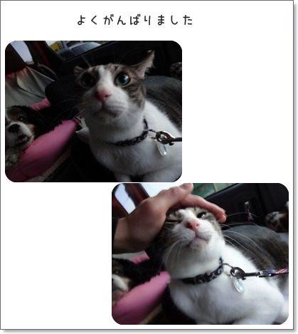 cats_20130409143620.jpg