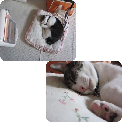 cats_20130412171333.jpg