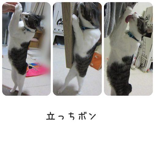 cats_20130424191522.jpg