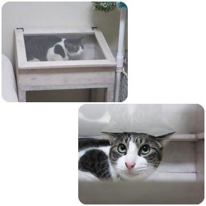 cats_20130427193513.jpg