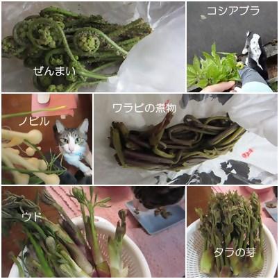 cats_20130505145355.jpg