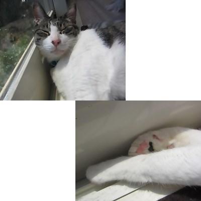 cats_20130516144505.jpg