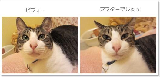 cats_20130522133013.jpg