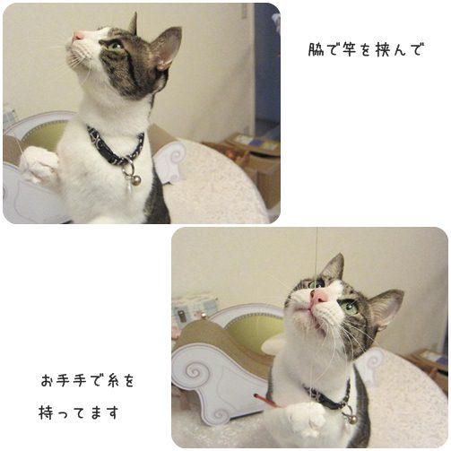 cats_20130530002203.jpg