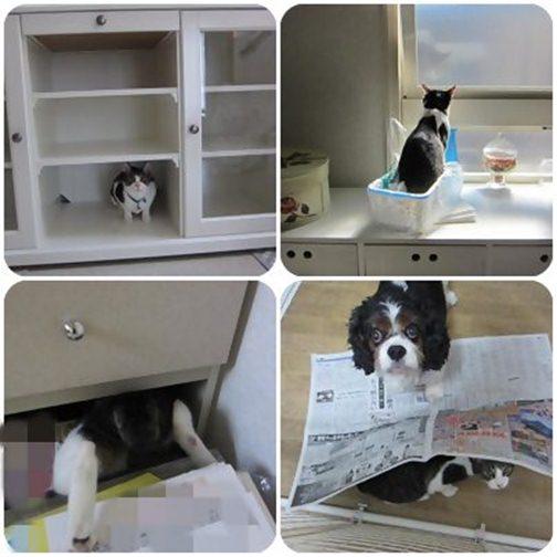 cats_20130602013424.jpg