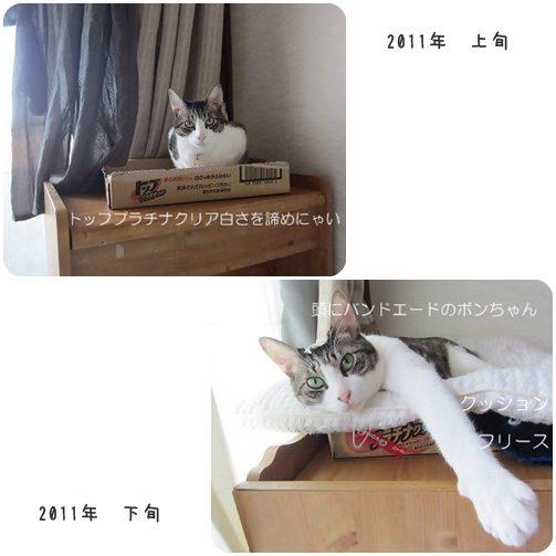 cats_20130604015534.jpg