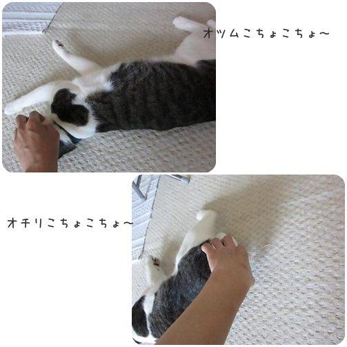cats_20130604173309.jpg