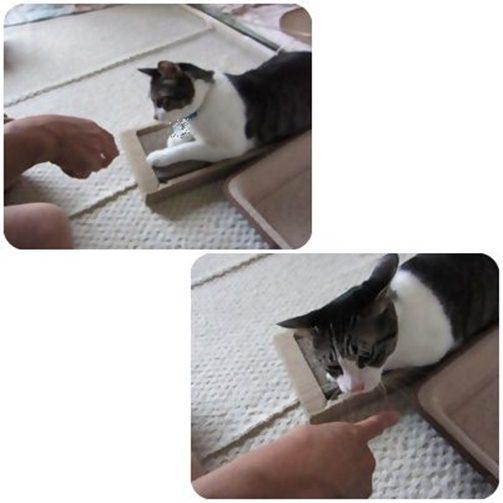 cats_20130607165355.jpg