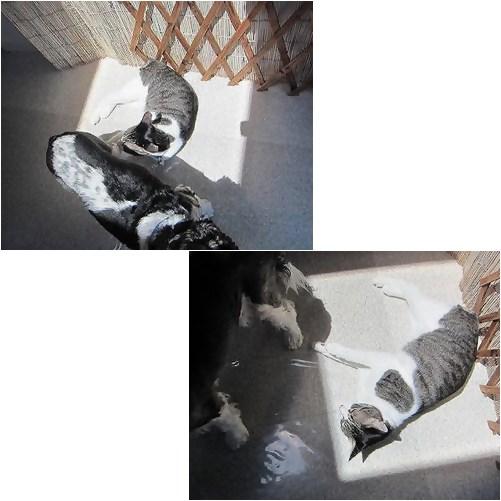 cats_20130615144158.jpg