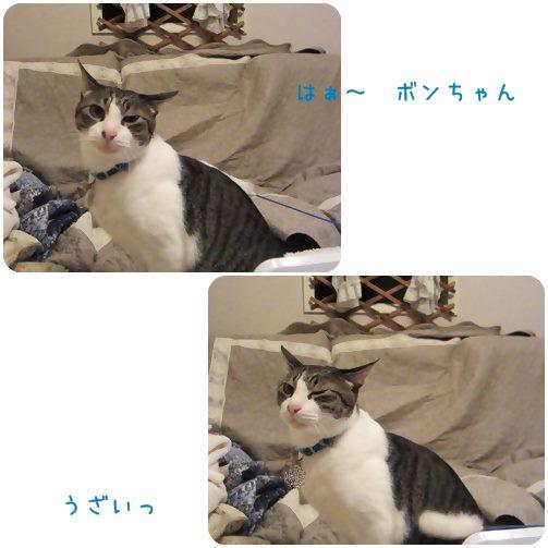 cats_20130626200100.jpg