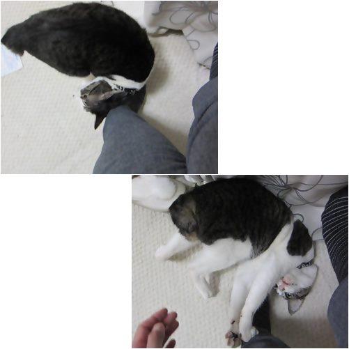 cats_20130627173652.jpg