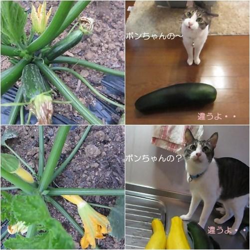 cats_20130701155947.jpg
