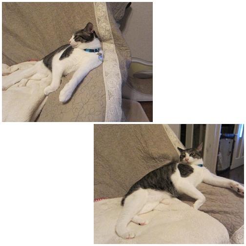 cats_20130707004635.jpg