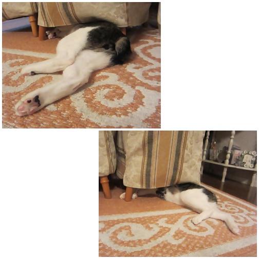 cats_20130708124555.jpg