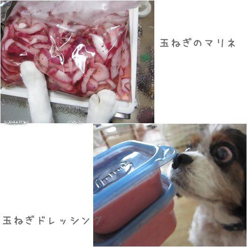 cats_20130712200418.jpg