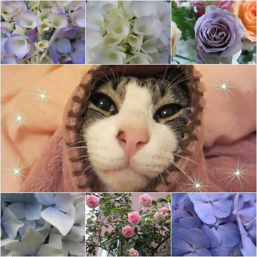 cats_20130715182516.jpg