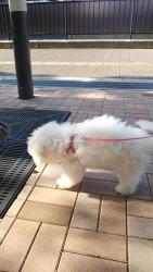 20131205初散歩2