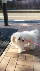 20131205初散歩3