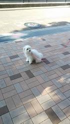 20131205初散歩4