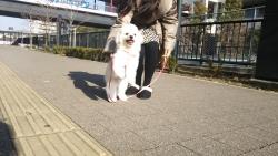 20131205初散歩5