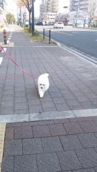 20131205初散歩7