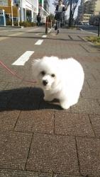 20131205初散歩9