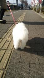 20131205初散歩6