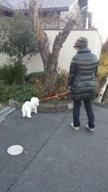 奈良散歩1