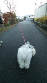 奈良散歩2
