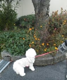 奈良散歩3