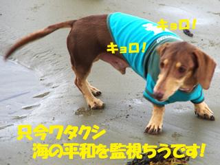 20131007130.jpg