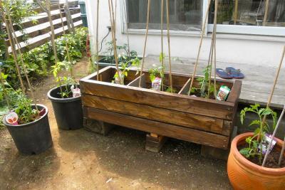 2012.05.17 プチトマトの住処