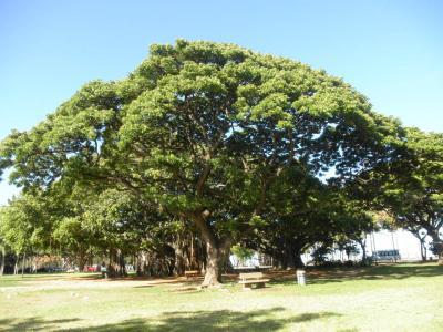 2012.07.01 この木何の木