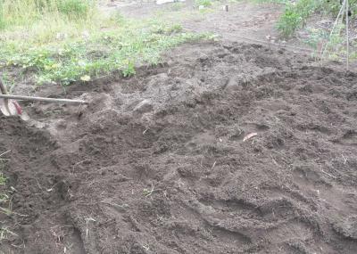 2012.08.09 畑