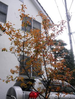 湘南の紅葉