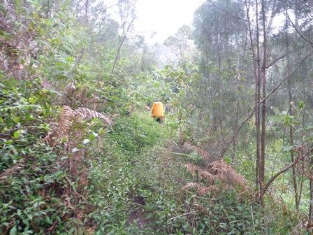 3Jurang Kualiからの登山道