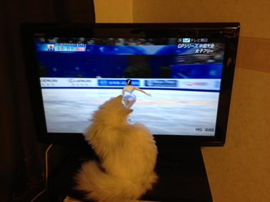 TVを見るダイナ