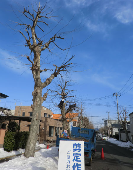 2014-1-30近所の光景③