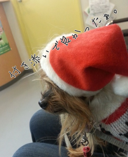 11_20121225230008.jpg