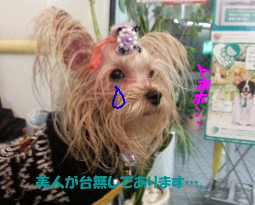12_20121225230008.jpg