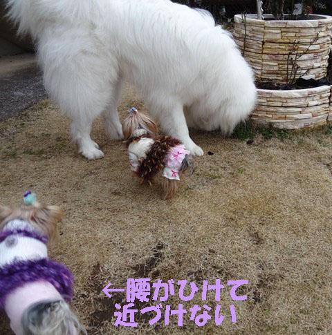 05大きな犬