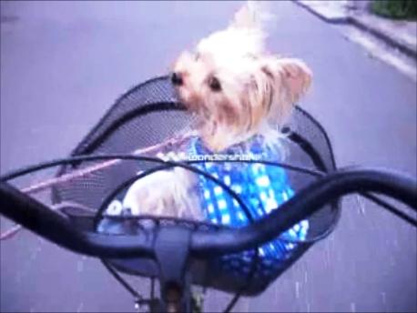 2自転車でお買いもの
