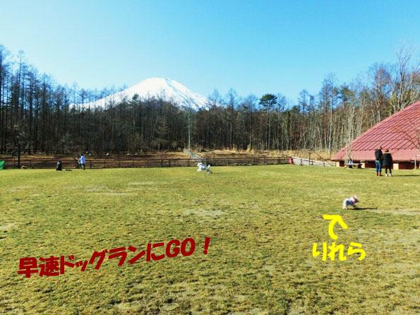 2_20121223014130.jpg