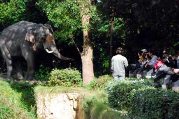 zoo-ibento01.jpg