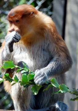 zoo-tenguzarui01.jpg
