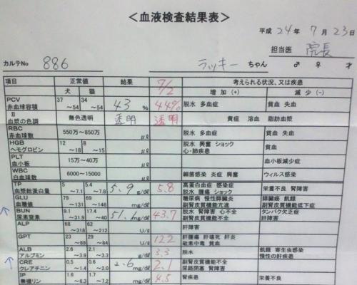 7/23血液検査