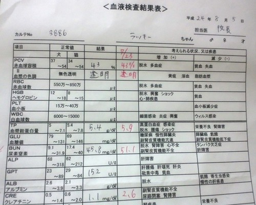 8月5日 血液検査