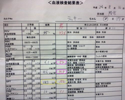 8月16日 血液検査