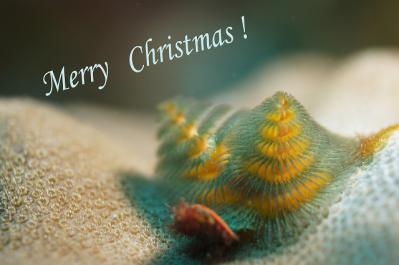2012クリスマスカード縮小