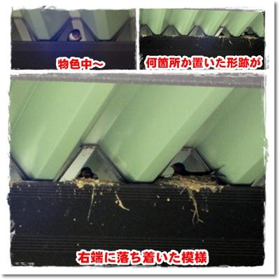 2012・5・18・ツバメの巣